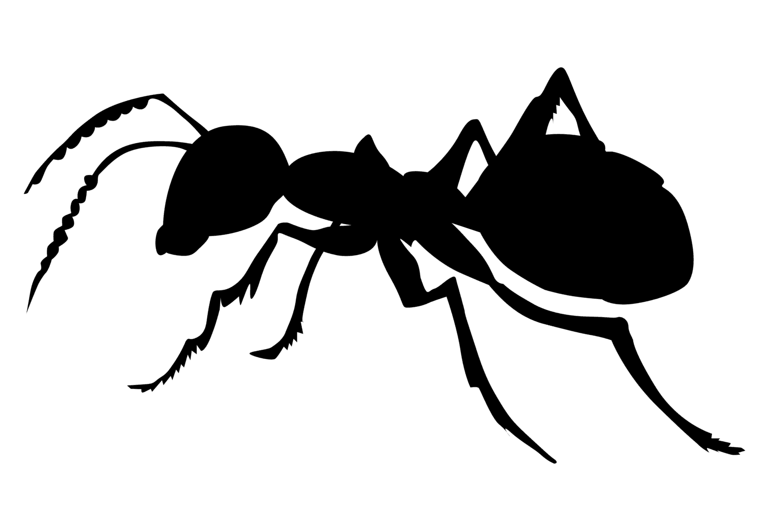 First Choice Pest Management Extermination In Massillon